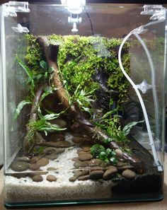 I'm currently working on a new project that is a Paludarium style tank. - Moss theme / Aquarium I have a dennerle ( i actually. Turtle Aquarium, Diy Aquarium, Planted Aquarium, Closed Terrarium Plants, Garden Terrarium, Terrarium Tank, Box Turtle Habitat, Frog Habitat, Reptile Zoo