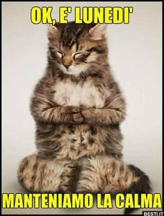 Check out these cute cats doing yoga! These yoga cats will make your heart melt. Funny Cat Memes, Funny Cat Videos, Funny Cat Pictures, Animal Pictures, Funny Cats And Dogs, Cats And Kittens, I Love Cats, Cute Cats, Comic Sketch