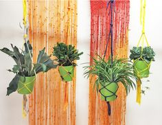 Hanging plants. Macrame colorful curtain.