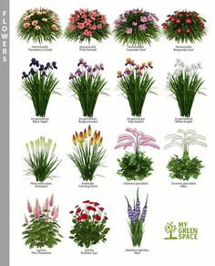 Landscaping Plants, Front Yard Landscaping, Landscaping Ideas, Beautiful Flowers Garden, Beautiful Gardens, Container Gardening Vegetables, Vegetable Gardening, Organic Gardening, Plantar
