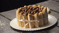 Recette avec instructions en vidéo: Envie d'un dessert gourmand et classy ? Testez cette recette de Charlotte à base de Nutella et Maltesers ! Ingrédients: - 1 paquet de biscuits cuillère, - 5 c.à.s de nutella, - 750g de mascarpone, - 100g de crème liquide, - Des Maltesers en déco