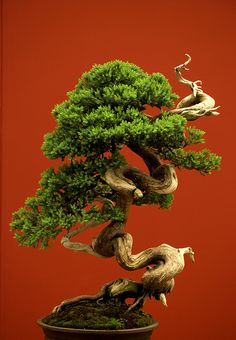 Bonsai Japanese tree