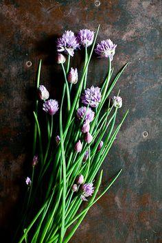 Chive Flowers by tartelette on Flickr. flowers. flora. bloom. wildflowers. vase. bouquet. xx