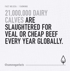21,000,000 dairy calves are slaughtered for veal or cheap beef every year globally. #govegan #vegan #dairyfree