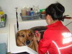 Ullanda keeping em clean & cute in #toronto #york region! http://www.aussiepetmobile.ca/york/ #dogs #Grooming