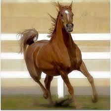 Graceful Arabian