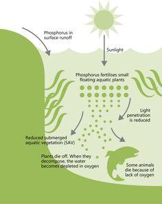 human impacts on aquatic life