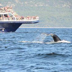 C'est un joli #concours photo auquel je vous invite à participer. Le #Québec vous a marqué en vacances? Alors postez votre photo du #Canada @aircanada pour fêter ses 150 ans #canada150. Bonne chance à tous! #whalewatching #tadoussac #saintlaurent #baleine #wildlife