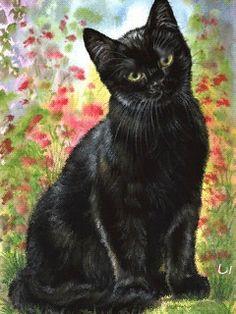 grasso nero micio gatto New York