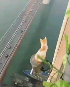 Humor Discover Pictures gifs and videos of animals acting like complete idiots. I Love Cats Cute Cats Funny Cats Animals And Pets Funny Animals Cute Animals Kitten Gif Crazy Cats Animal Pictures I Love Cats, Crazy Cats, Cute Cats, Funny Cats, Animals And Pets, Funny Animals, Cute Animals, Sick Cat, Kitten Gif