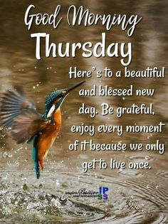 Good morning thursday images, quotes and pictures. Thursday Morning Prayer, Good Morning Thursday Images, Happy Thursday Quotes, Thursday Humor, Thursday Motivation, Good Morning Photos, Good Morning Good Night, Motivation Quotes, Morning Blessings