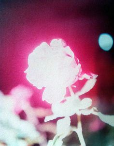 "Rinko Kawauchi, ""Untitled,"" from the series ""Illuminance."" Saw this at Aperture in NYC this year - gorgeous"