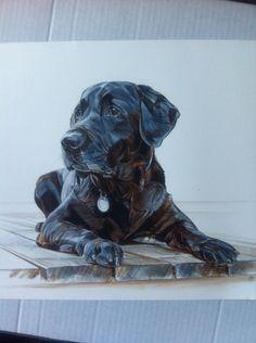 KING dogportrait watercolour @annehviidnicolaisen.dk