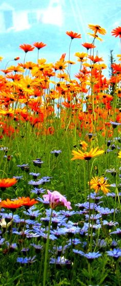 Blue and orange contrast colours. Need to do this next year with perennials, I love that orange what are these?