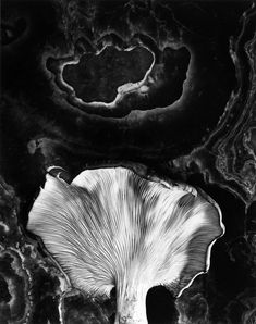 Paul Caponigro • Fungus, Ipswich, Massachusetts. 1962