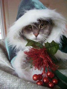 Une pensée à tous nos amis animaux en cette veille de Noël