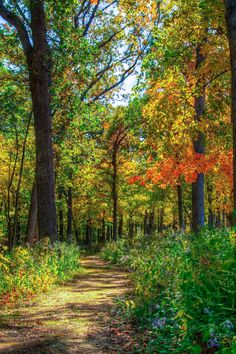Wyalusing State Park trail (Wisconsin) by Marc Kohlbauer cr.c.af.