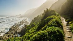 UPDATED March 2020 - The Otter Trail is a trekking experience of a lifetime. Find out everything about the Otter hiking trail- facts, itinerary, tips, tricks, and transportations. Tsitsikamma National Park, Safari, Waterfall Trail, Le Cap, Rando, Travel Goals, Otters, Hiking Trails, Places To See