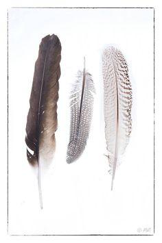 Feathers , veren van verschillende vogels.