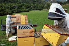 Commercial Beekeepers working on their Beehives. It's time to load the honey harvest. Boxes of full frames of honey are loaded on a vehicle to be taken to the extraction shed. Bee Keeping, Harvest, Vehicle, Wordpress, Frames, Shed, Commercial, Honey, Stock Photos