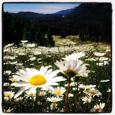 Don't miss Durango's Wildflower Season