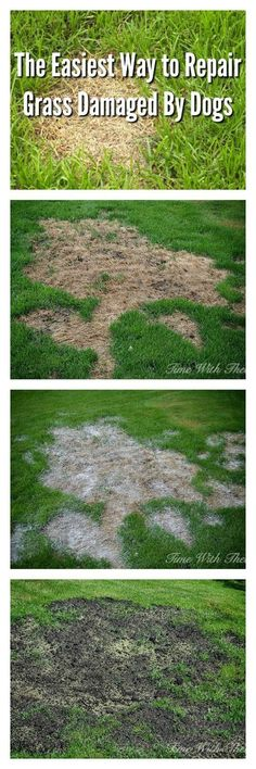 If you're a dog owner, chances are good that you have a recurring problem every spring: a backyard dotted with bare patches where your beloved pooch has urinated. Here's how to rid your yard of these spots.
