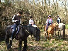 Long Mountain Centre Pony Trekking
