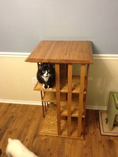 1000 images about pet food on pinterest cat feeding diy porch and cat food. Black Bedroom Furniture Sets. Home Design Ideas