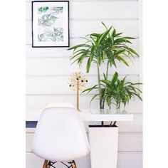 monstera – papurino sisustus E Room, Eames, Cozy, Art Prints, Wall, Green, Sunday, Instagram, Art Impressions
