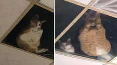 Shop Owner Installed A Glass Ceiling And Now His Cats Are Always Watchin... Support Dog, Unique Cats, Glass Ceiling, Funny Animals, Dog Cat, Dogs, Cute, Youtube, Shop