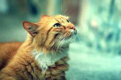 Animals cats pets