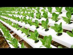 Cómo tener Cultivos Hidropónicos - TvAgro por Juan Gonzalo Angel - YouTube