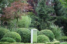 Ogród Dominiki - strona 232 - Forum ogrodnicze - Ogrodowisko