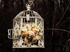 Dry your roses in a birdcage hanging in a tree