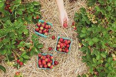 Building a Climate Victory Garden to Regenerate Soil   Modern Frontierswoman Benefits Of Gardening, Organic Gardening, Gardening Tips, Vegetable Gardening, Garden Types, Permaculture, Straw Bale Gardening, Sensory Garden, Strawberry Plants