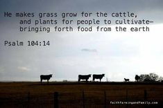 makes grass grow for the cattle, and plants for people to cultivate -- bringing forth food from the earth. ~` Psalm makes grass grow for the cattle, and plants for people to cultivate -- bringing forth food from the earth. Farm Life Quotes, Farmer Quotes, Cow Quotes, Bible Quotes, Bible Verses, Scriptures, Qoutes, Psalm 104, Psalms