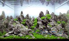 Rediscovery by Antonio Nikolic from Croatia Aquarium size: 35 x 22 x 29 cm