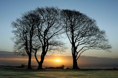 The Last Sisters - Three remaining Beech trees (Fagus), part of the Seven Sisters on Cothelstone Hill, Quantocks, Somerset. Country Walk, Country Life, Somerset Levels, North Somerset, British Country, Tree Silhouette, Back In Time, Mountaineering, Early Morning