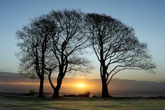 Seven Sisters, Quantock Hills, Somerset