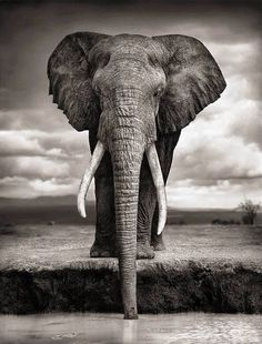 Nick Brandt  http://www.3elephants.in  http://www.facebook.com/3elephants.cheraibeach