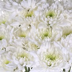 Kiss of Mint Dahlia Style Flower Water Flowers, Green Flowers, White Dahlias, White Cushions, Dahlia Flower, Mother Nature, Mint Green, Greenery, Bouquet