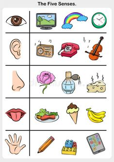 Photo about Five senses - touch, taste, hearing, sight, smell. - worksheet for education. Illustration of illustration, homework, sight - 95091338