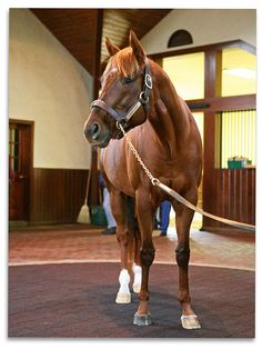 Smarty Jones the thoroughbred Horses And Dogs, Show Horses, Animals And Pets, Most Beautiful Animals, Beautiful Horses, Pretty Horses, Smarty Jones, American Pharoah, Sport Of Kings