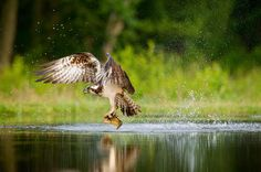 Capturing birds in flight is not always easy, but with just a few tips from…