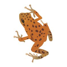 It's Symbol of the Week Wednesday again! And the symbol is... the Poison Dart frog! Click to download for FREE! #frog #vector #illustration #scicomm