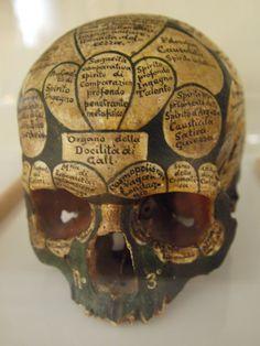 Skull according to Franz Joseph Gall. Vanitas, Memento Mori, Crane, Pseudo Science, Human Skull, Anatomy Art, Skull And Bones, Skull Art, Macabre