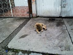 Mis Fotos de Perros