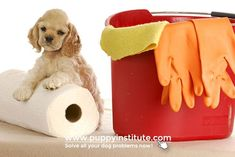 Incredible Tips: Carpet Cleaning Pet Stains Potty Training carpet cleaning tricks stain removers.Carpet Cleaning Solution For Steam Cleaner. Dry Carpet Cleaning, Carpet Cleaning Machines, Diy Carpet Cleaner, Diy Cleaning Products, Cleaning Hacks, Cleaning Quotes, Dog Cleaning, Homemade Products, Organizing Tips