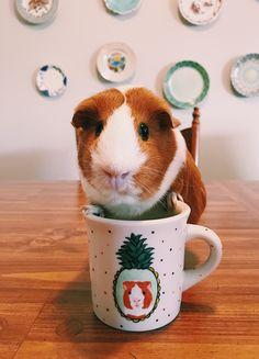 Hand painted pet portrait mug #Offthecuffco #Etsy