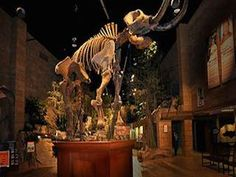The Creation Museum in | Kentucky - on FamilyDaysOut.com